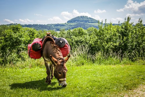 hohenstaufen  donkey  trekking