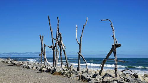 hokitika beach,coast,beach,new zealand,south island,sea,wood,drift wood