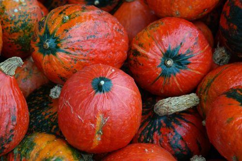 Hokaidas,skvošas,kabocha,milžiniškas moliūgas,cucurbita maxima,oranžinė,raudona,daržovių daržovės,daržovės
