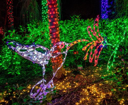 holiday,decorations,botanical gardens,hummingbirds,florida christmas,xmas,season,ornament,festive,merry,trees,colorful,night photography