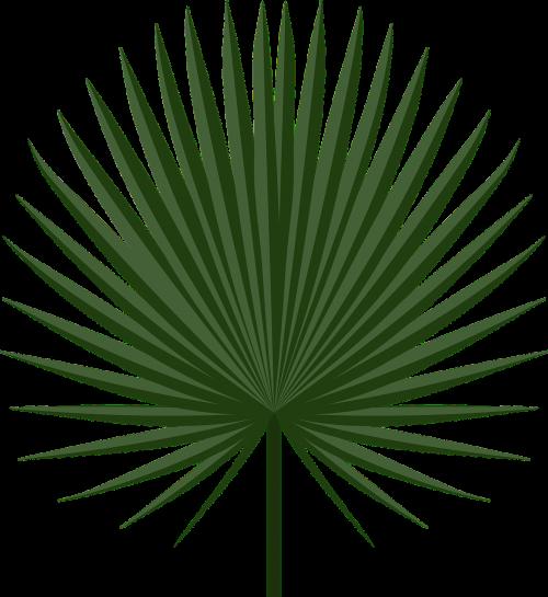 holiday leaf palm