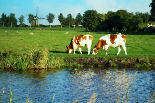 holland landscape windmill