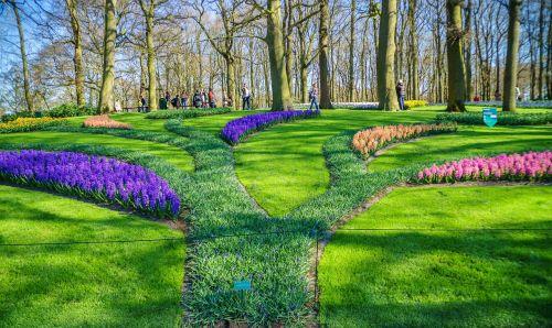 holland tulpenbluete park