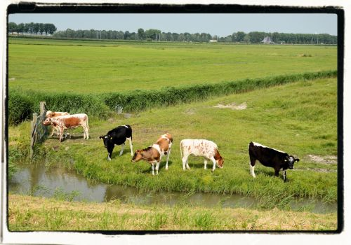 Dutch Picture