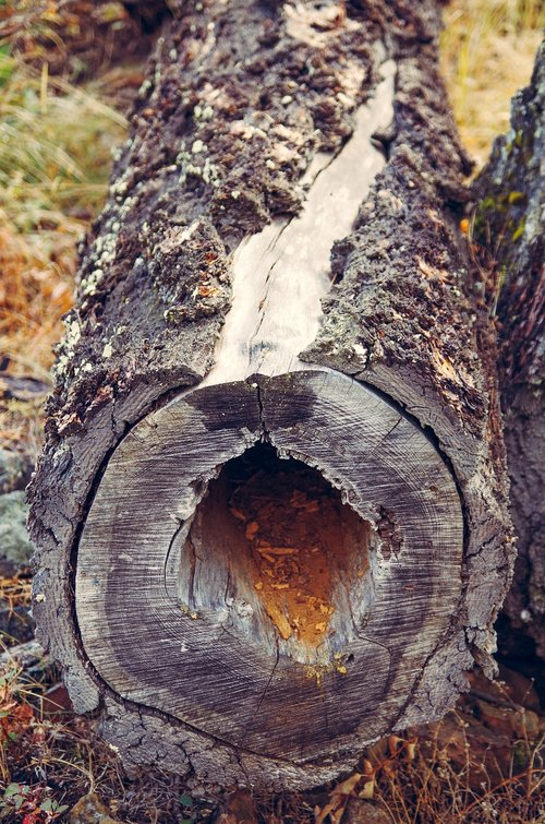 hollow log  log  wood