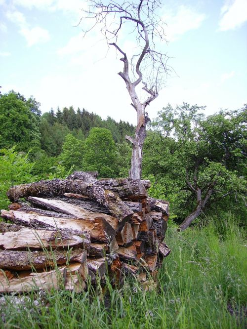 holzstapel tree wood
