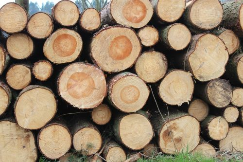 holzstapel like annual rings
