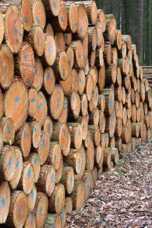 holzstapel spar forestry