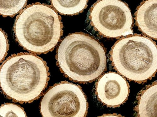 holzstapel hardwood tree trunks