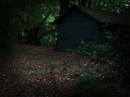 home hut forest