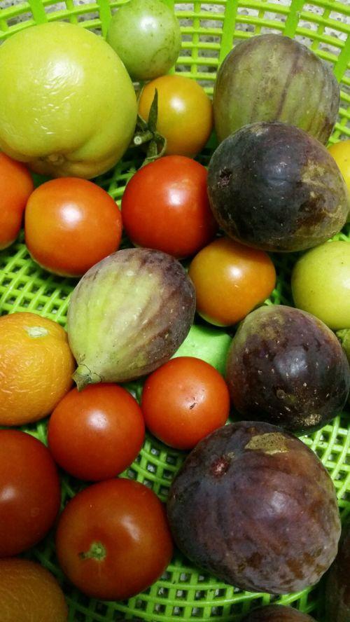 Home Grown Organic Fruit