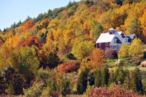 Home Nestled In Fall Foliage