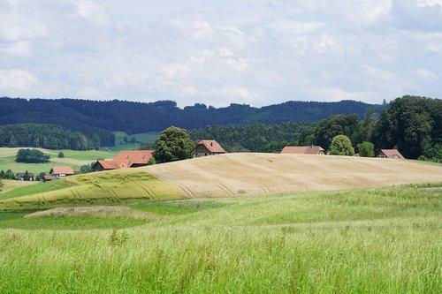 homestead  hamlet  village