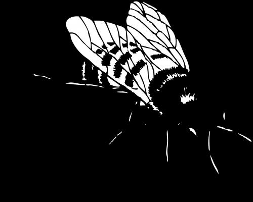 honey bee stripes