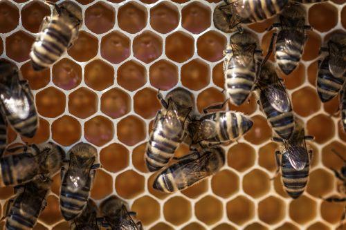 honey beehive honeycomb