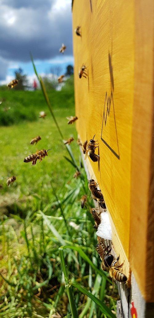 honey  bee  nature
