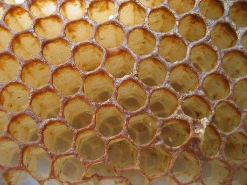 honey bee honeycomb