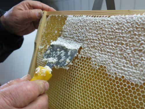 honey honeycomb uncapping