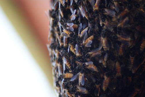 honey bee beehive macro