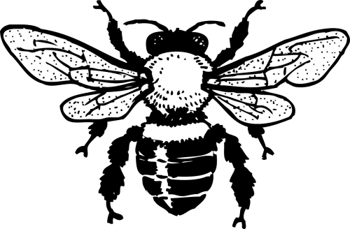 honey bee insect drawing