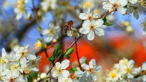 honey bee  bee  honey