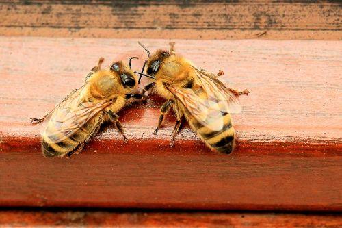 honey bees beehive hard working
