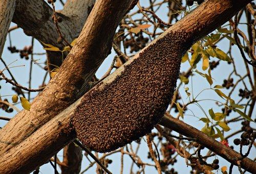 honeybees  beehive  beekeeping