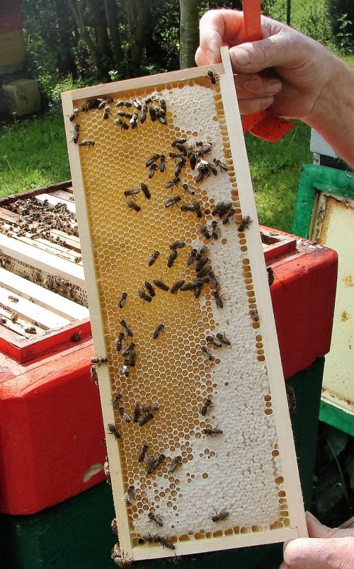 honeycomb honey virgin