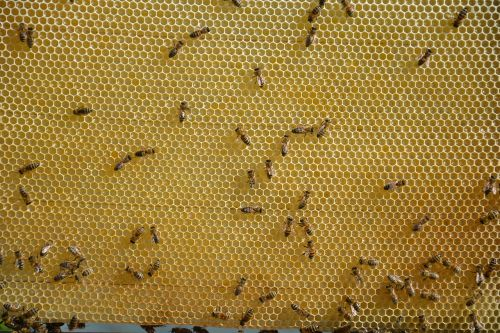 honeycomb honey sweet