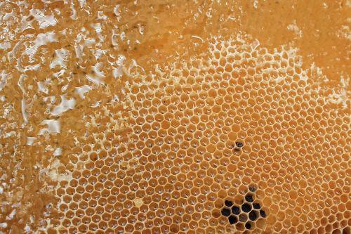 honeycomb honey delicious