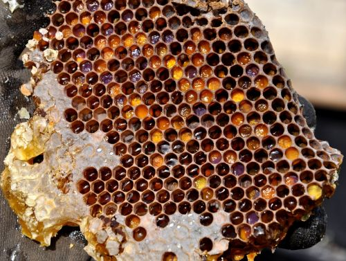 honeycomb pollen warehousing honey