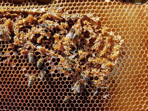 honeycomb  bees  honey