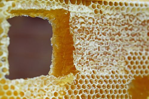 honeycomb comb honey