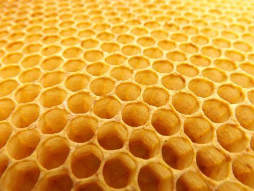 honeycomb beekeeping beehive