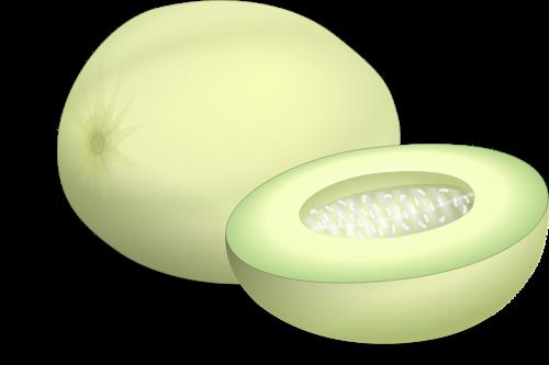 honeydew melon fruit