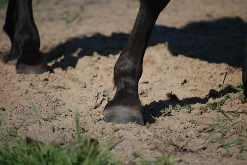 hoof galop the horse