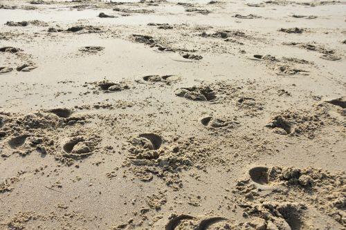 hoof prints hoofprints beach