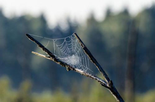 hookah network cobweb