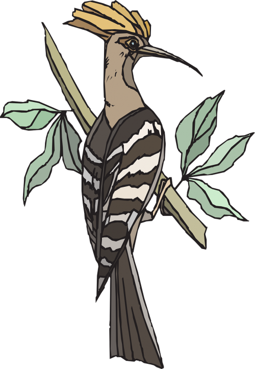 hoopoe tree bird