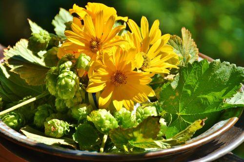 hops sunflower green