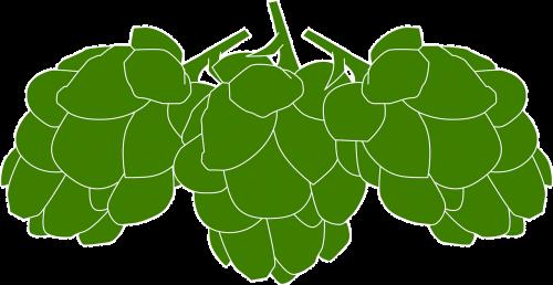 hops cones green