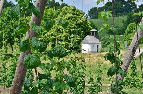 hops  cultivation  bavaria
