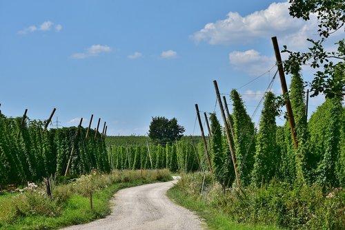 hops  beer  growing area