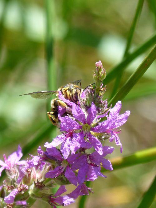 hornet flower libar