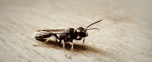 hornet wings macro