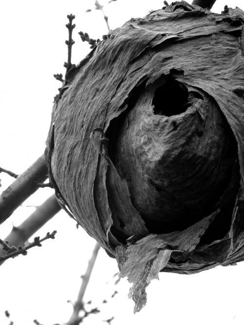 hornet nest hornet's nest