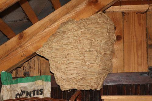 hornets nest hornissennest