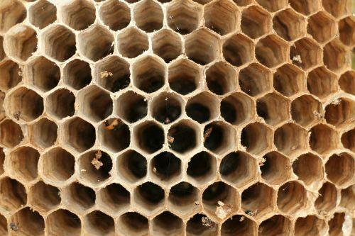 hornissennest hornets symmetry