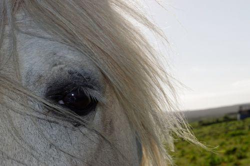 horse horses head head