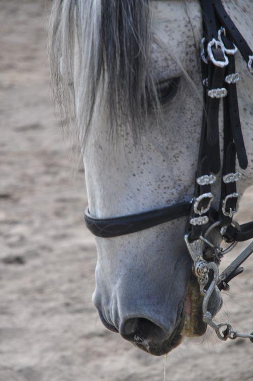 horse face portrait